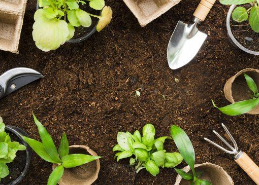 Jakie warzywa warto sadzić blisko siebie