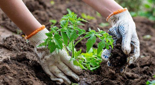 Przygotowanie własnego domowego ogródka